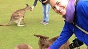 Feeding the Kangaroos in Tasmania