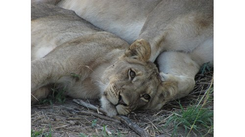 Three-toed sloth - Plan your Costa Rican adventure