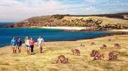 Amazing Kangaroo Island!
