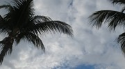 Picture yourself on the beach, palm trees above!