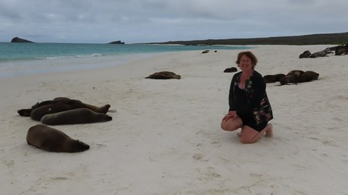 Visiting sea lions On Espanola, Gardner Bay