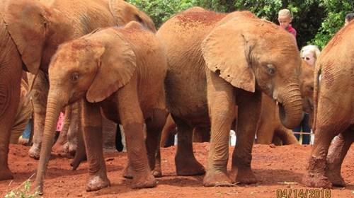A visit to the Elelphant Orphanage Nairobi Kenya