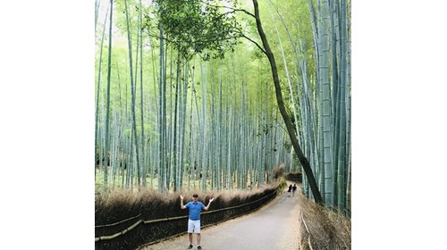 Arashiyama Bamboo Forest, Kyoto, Japan - May 2016