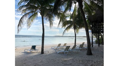 Palm studded beach in Riviera Maya