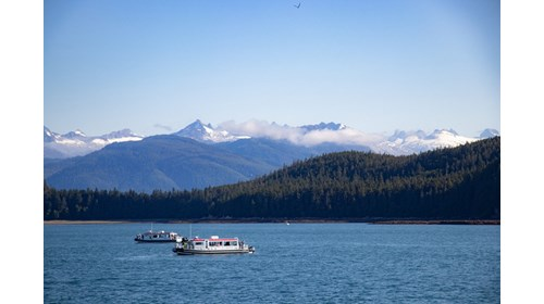 Whale Watching Tour in Juneau