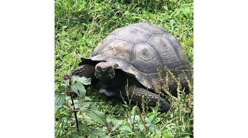 Kayaking and Snorkeling on Isabella Isand