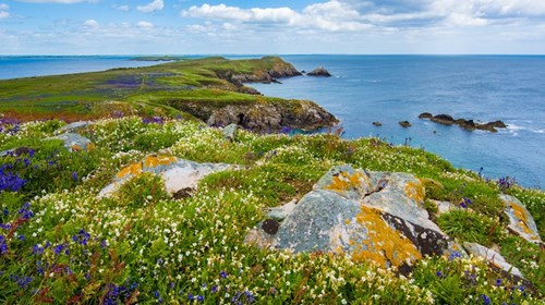 Saltee Islands - County Wexford, Ireland