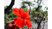 Observe Hawaiian Foliage