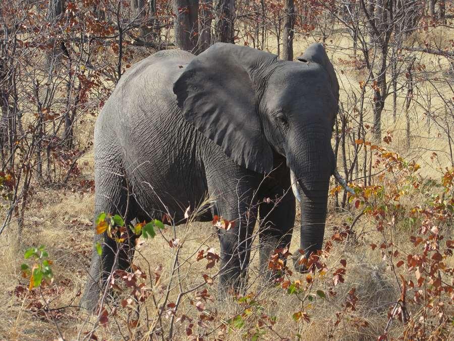 A PHOTOGENIC ELEPHANT IN TANZANIA