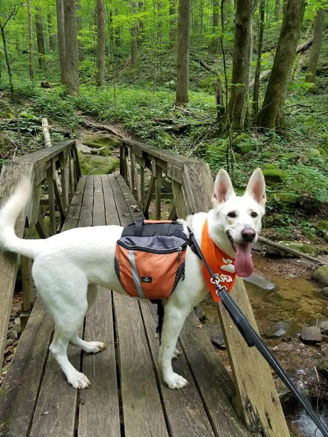 Olga's first hike in Frozen Head State Park, TN