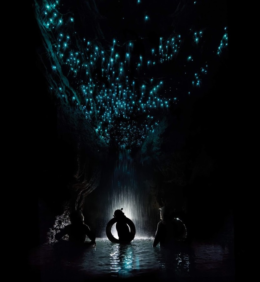 The glow worms in the Waitomo Caves