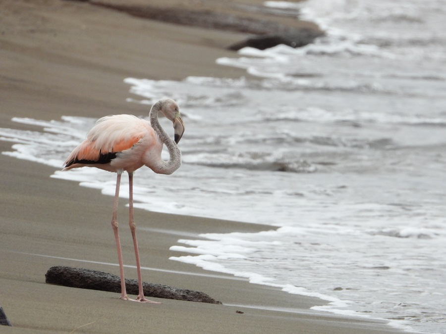 Flamingo greeting us upon landing on the beach