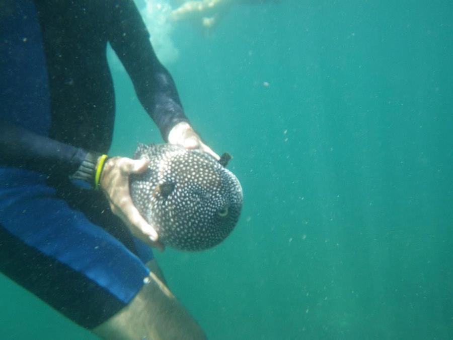 Snorkeling on 7 Bay Tour