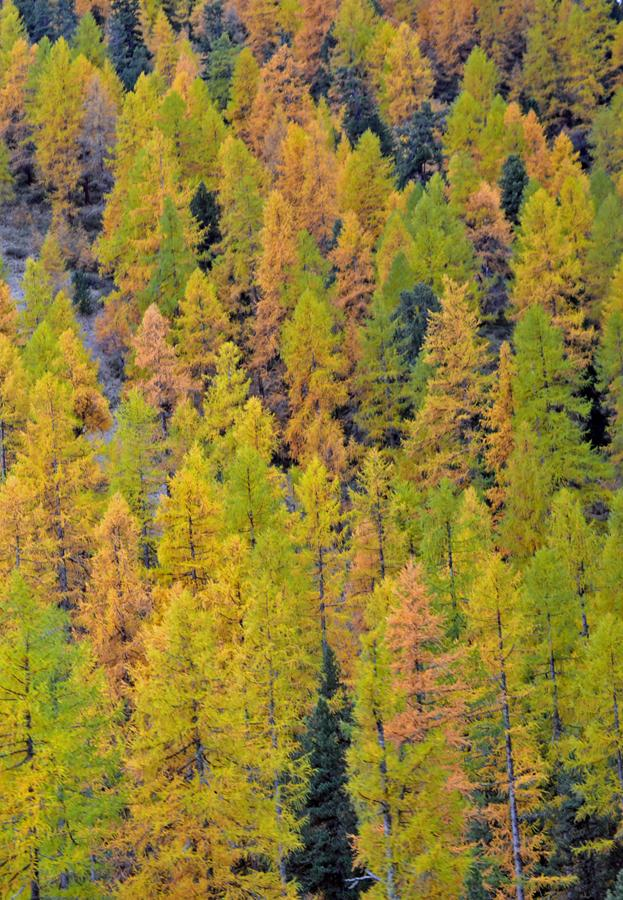 Fall Colors on the Glacier Express