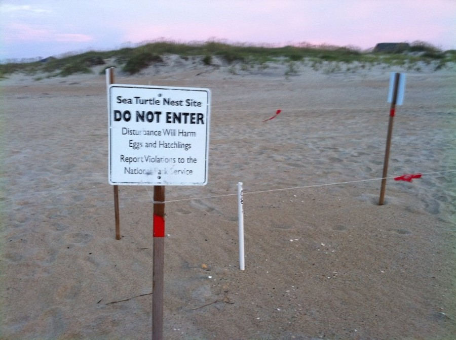 Sea Turtle Nesting area