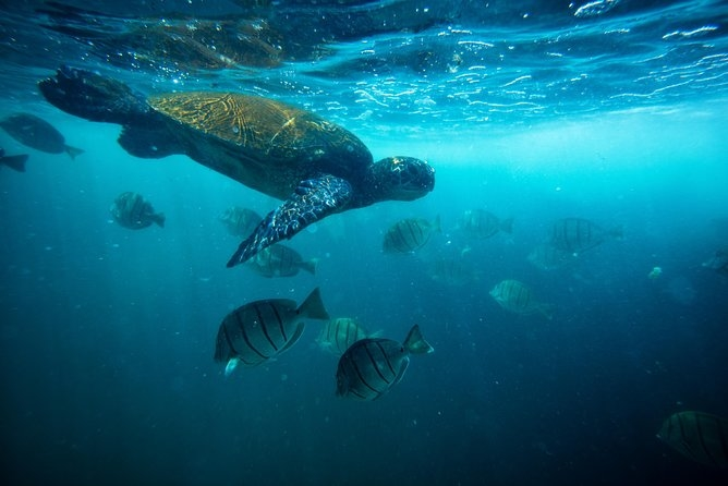 Ask me-Turtle Canyon Catamaran Snorkel Cruise