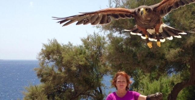 Freddie the Maltese Falcon and me
