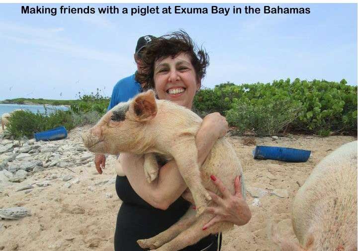 Swimming with the pigs at Exuma Bay Bahamas