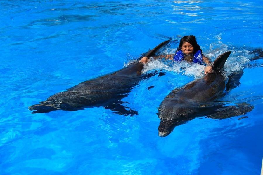 Dolphin Swim checked off the bucket list!