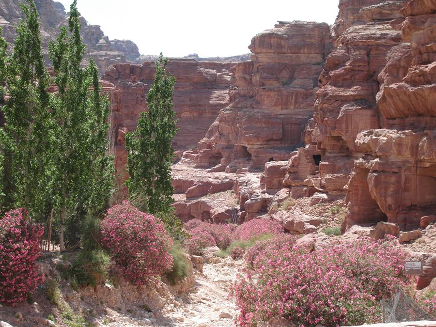 Canyon in Petra