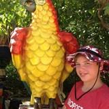 Now Sapphire Parrot Visit