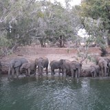 Elephant herd on the Zambezi River