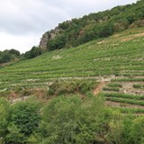 One of many vineyards along the Danube