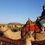 Taking a camel to Sunet at Uluru