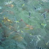 Clear Water and Colourful Fish!