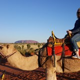 My date to Sunset, Bejah the camel