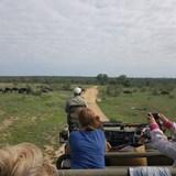 Safari Jeep ride in the South Africa bush