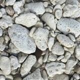 beachside rocks in the Bahamas