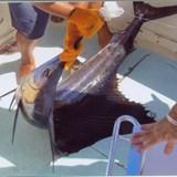 Excusion 2: Deep Sea Fishing
