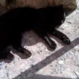 Sleeping kitty the Colosseum