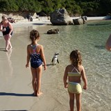 Boulders Beach-Swimming with the African Penguins