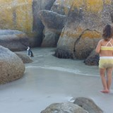 Boulders Beach - Jack Ass Penguins