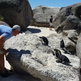 Boulders Beach - Africa Penguins