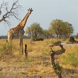 Safari in the Selinda Reserve  Great Plains