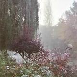 Monet's Garden Excursion Giverny, France