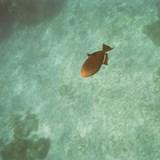 Pretty little friend in the aqua water.