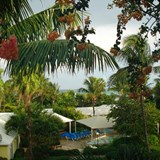 Lush view to the ocean from my Caribbean Village r