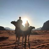 Sunrise Camel Ride