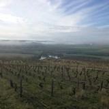 Early spring in a Chablis Premier Cru vinyeard