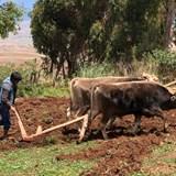 Farming in Misminay
