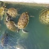 Cayman Turtle Center