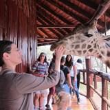 At the Giraffe Center