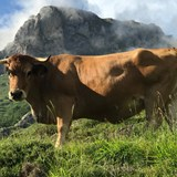 Up Close and Personal in Asturias