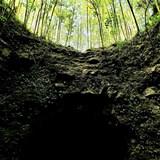 Caves under a Sugar Plantation