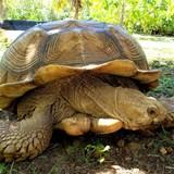 Tortoise Wildlife Sanctuary
