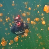 Swimming in Jellyfish Lake